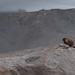 Small photo of Marmot