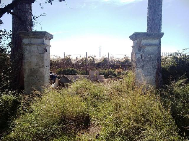 Rutigliano-Segati 19 alberi secolari di Rutigliano (4)