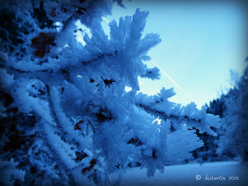 frost (9)