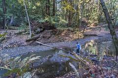 _WCB4804 Nisene Marks S.P Aptos Creek