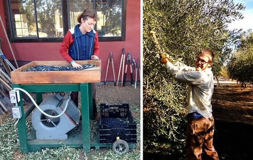 Susan和Colin Flatlands橄榄油