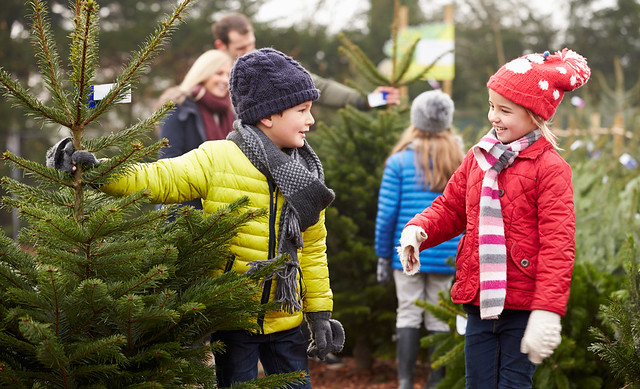 Ardcarne Christmas Trees