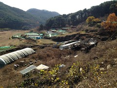Yongdang Dog Farm Shut Down!