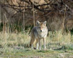 Antelope Island 23 Nov 2016