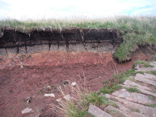 Upland Peat Bog on the Old Red Sandstone, along the Extension
