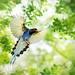 ~ Flying Free ~ by Fu-yi