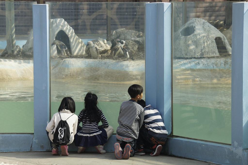 台南市學甲區頑皮世界野生動物園區 (30)
