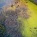 Pond by luissaenz_com