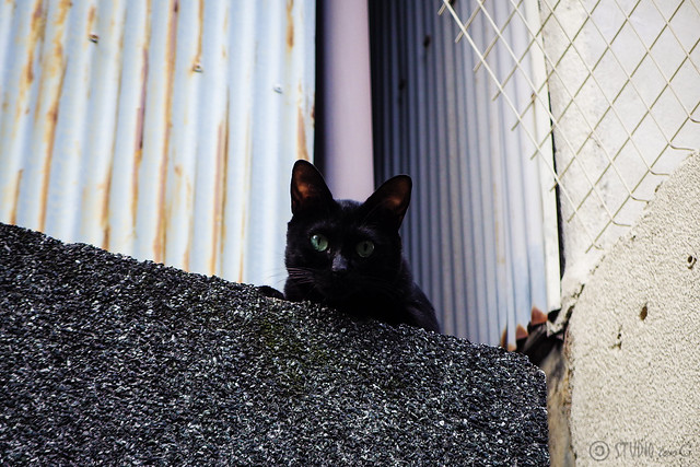 Today's Cat@2015-09-12