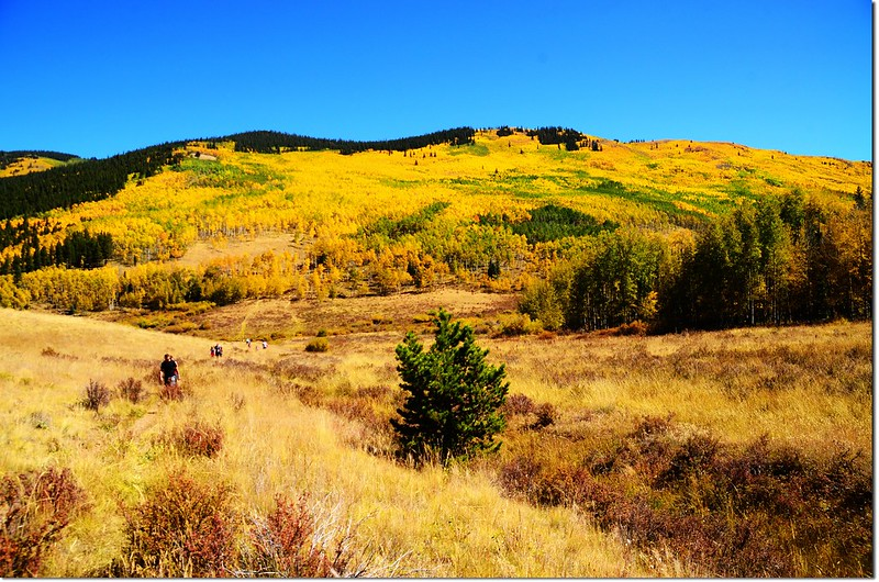 Fall colors at Kenosha Pass, Colorado (33)