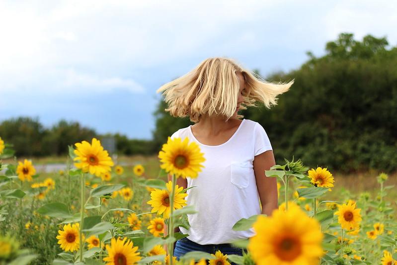 Sonneblumenfeld Alisha September 2015 110gimp