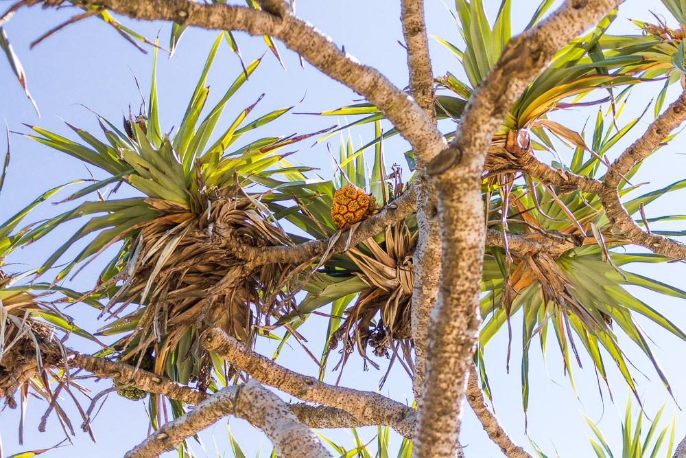 caloundra palm trees blue sky