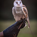 Southeastern Raptor Center - Auburn University
