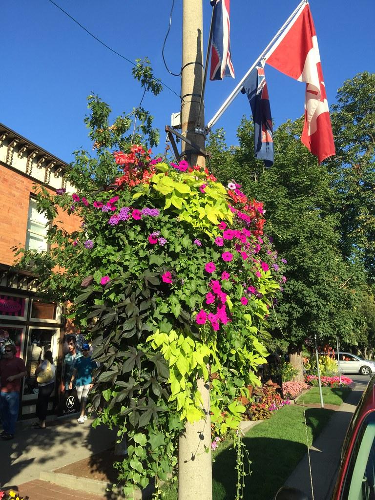 Ontario Flowers (24)