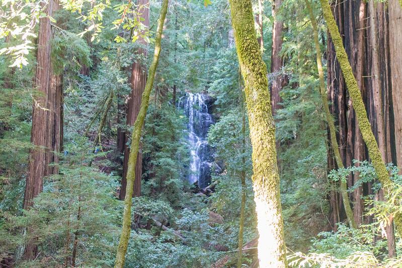 01.02. Berry Creek Falls Loop Hike