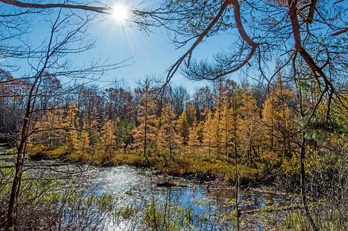 Tamarack Swamp
