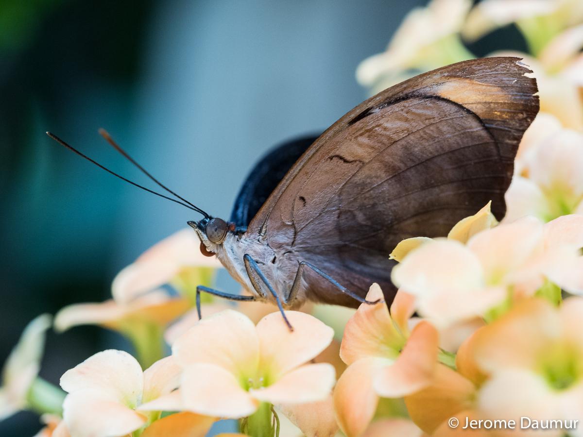 Butterflies Garden 8