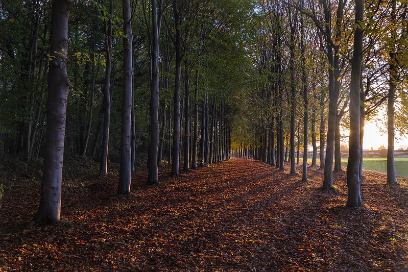 Autumn leaves Explored 2016-11-18