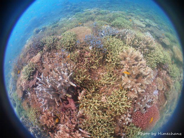 カラフルサンゴの隙間に小魚いっぱい♪