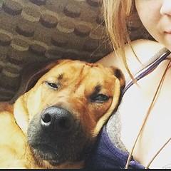 Such a goober #nationaldogday #mutt :dog: