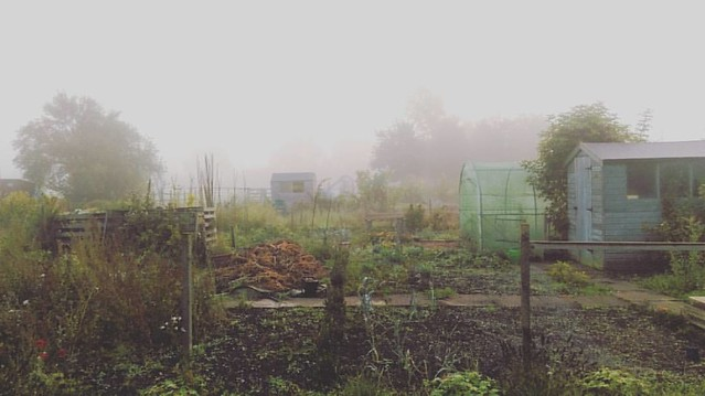 Woke up early and walked down to the allotments in the mist. I love this time of year.