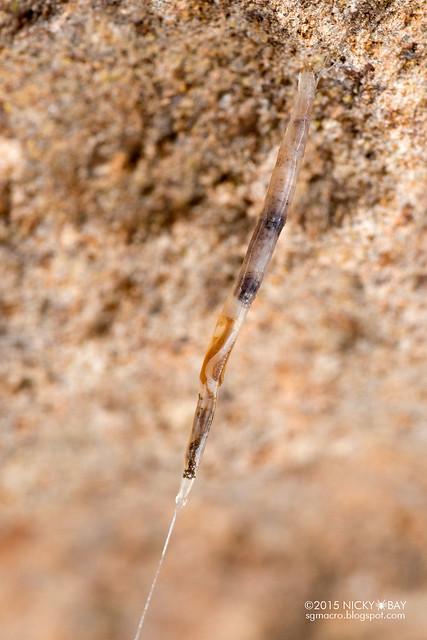 Fungus gnat larva? - DSC_7860
