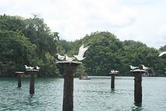 45 - Los Haitises national park / Los Haitises Nationalpark
