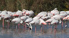 Flamingos by markkilner