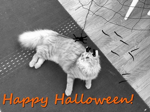 halloween pöy