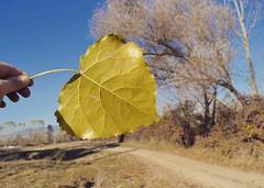 Bir ölüm vefalı Birde sonbahar... Zarifoğlu
