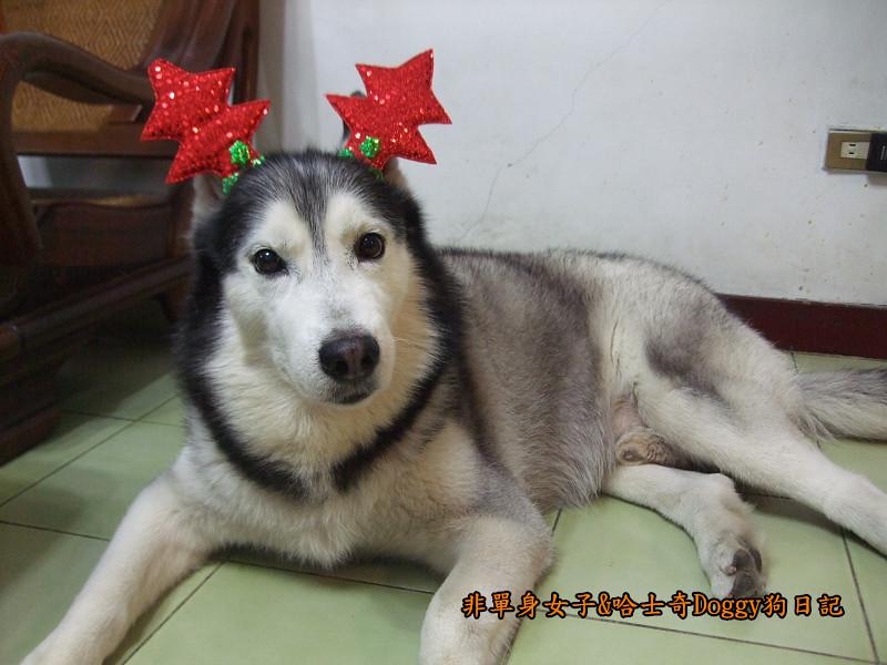 Doggy聖誕節紅色聖誕樹髮箍裝扮11