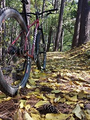 2016 Bike 180: Day 188 - Cone Zone