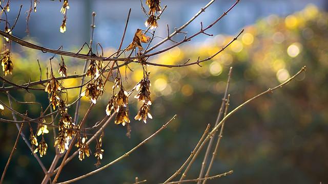 Autumn bubbles...