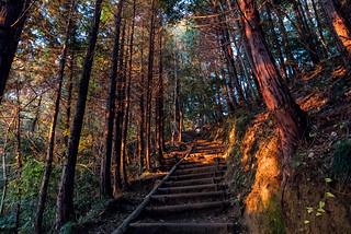 日差しがあたり始めた稲荷山コース