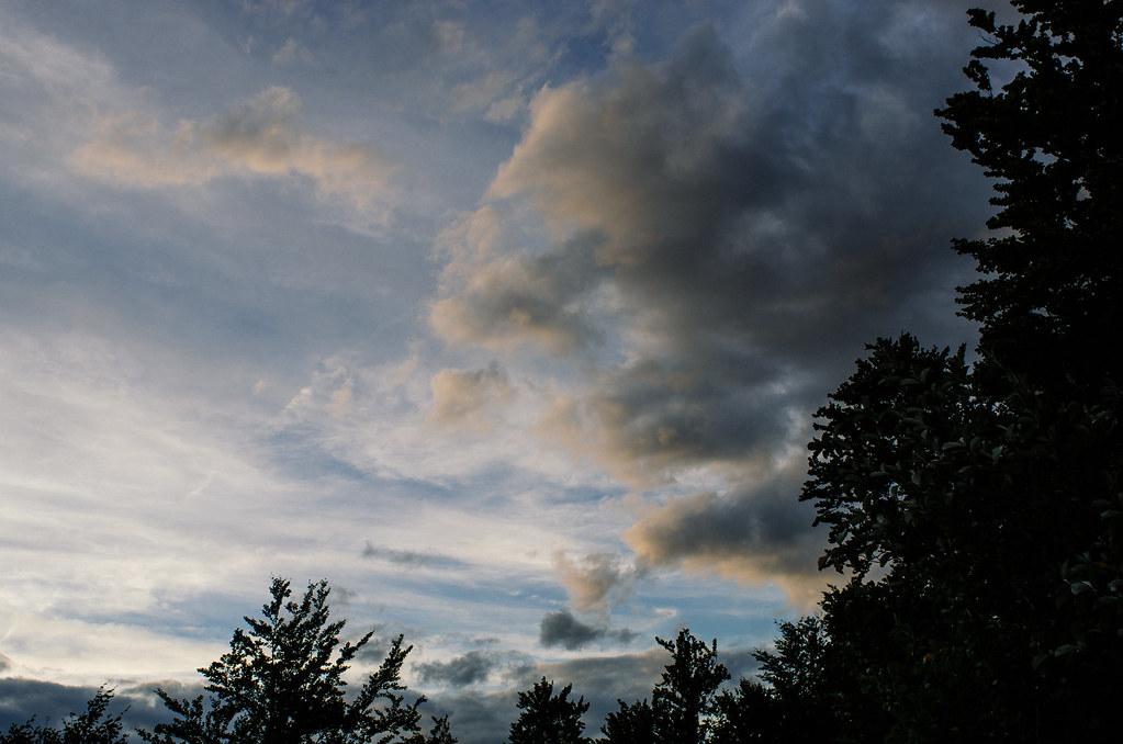 Observer les animaux - Forêt d'Auberive - Vue imprenable sur le ciel