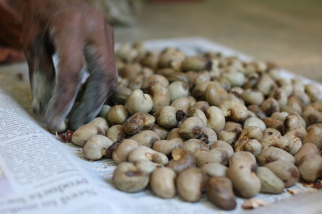 Cashew cracking