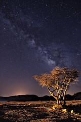 seeds of stars
