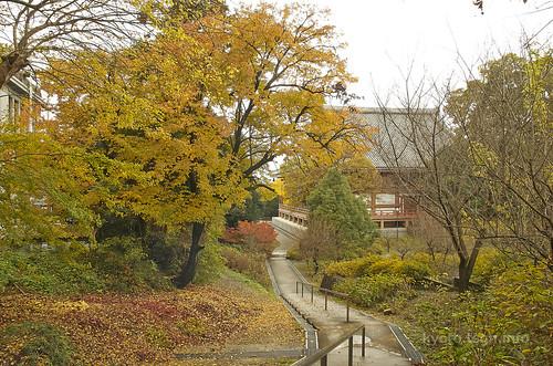 【写真】2014 紅葉 : 智積院/2020-09-07/IMGP7556