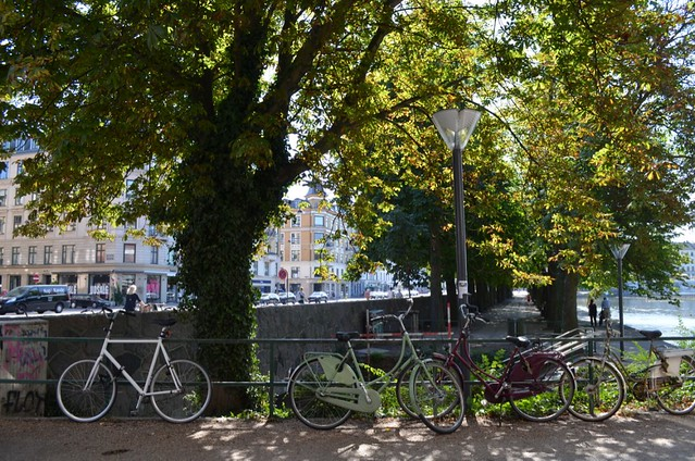 bikes parked under tree at lakes Copenhagen
