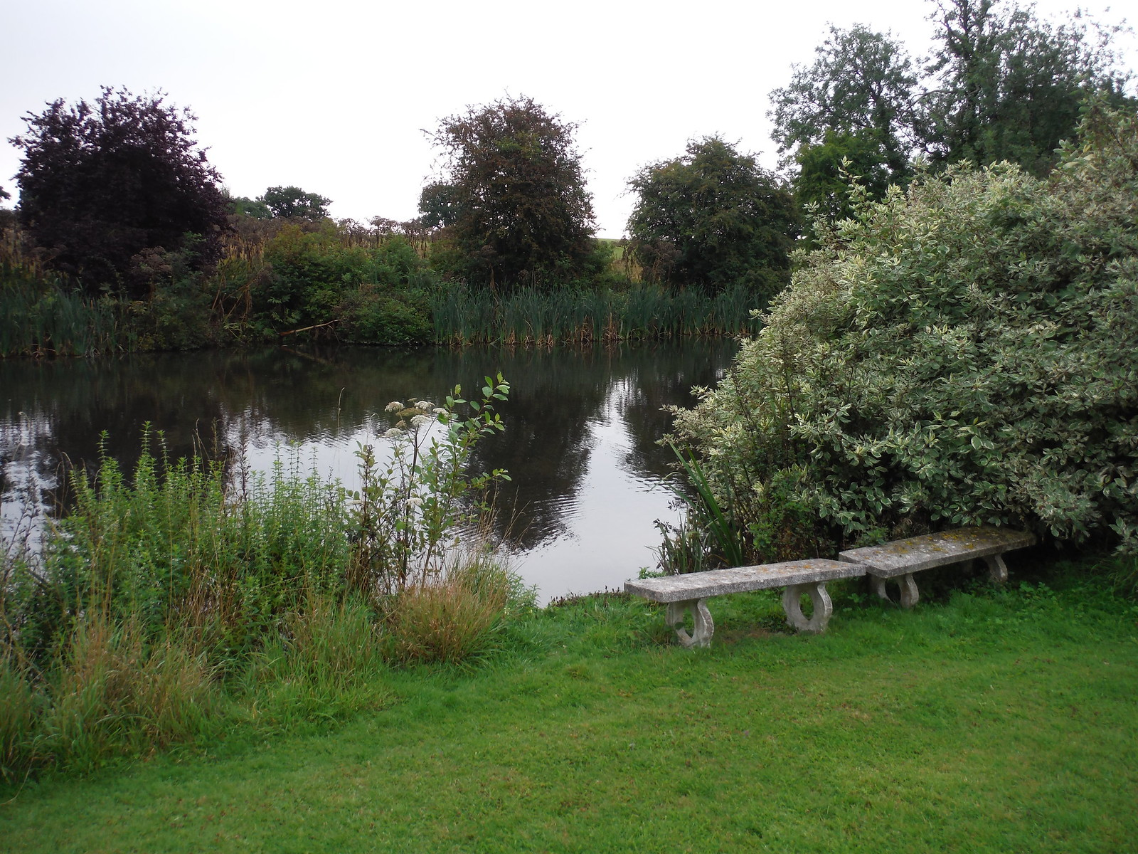 Pond by Stanstead Lodge SWC Walk 164 Roydon to Sawbridgeworth via Henry Moore Foundation