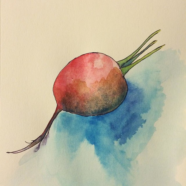 Radish #radishes #gouache #gouachesketch #sketches #watercolors #watercolorsketch #art