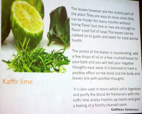 health-benefits-keffir-lime-markut.jpg