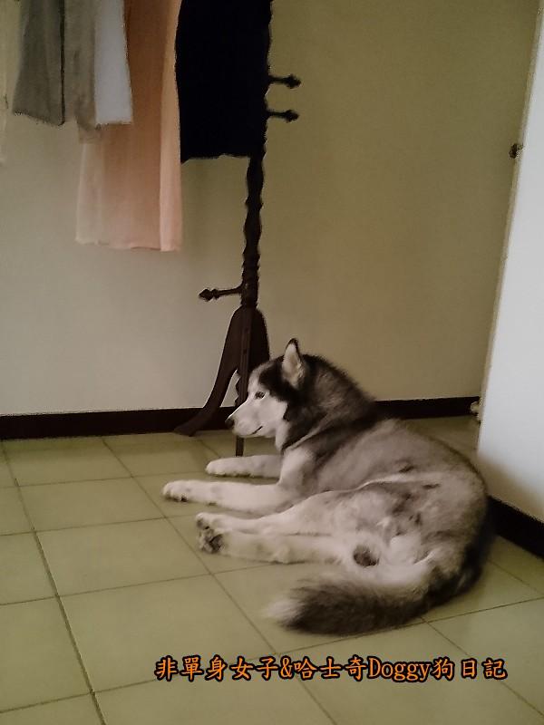 Doggy颱風02