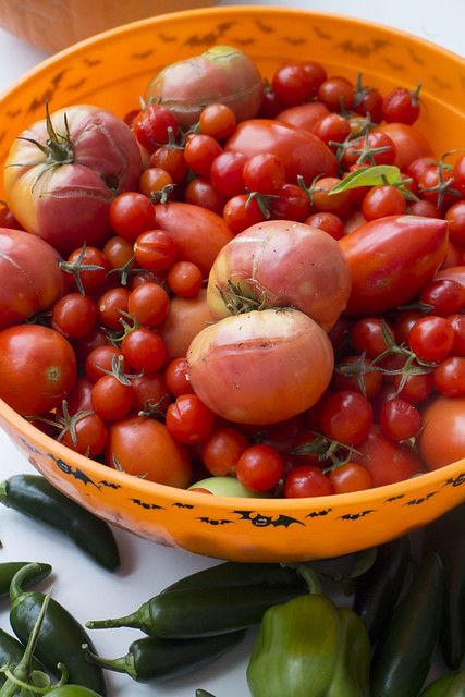 End of Season Harvest_8