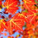 Fall Penetration by AZ Imaging