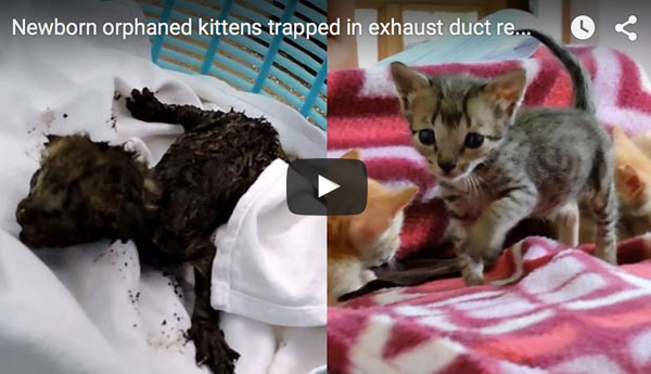 newborn-kittens-saved-from-exhaust-duct