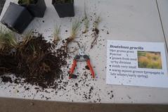 Propagation Training for Master Gardeners