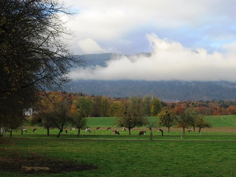 Feldbrunnen scenery