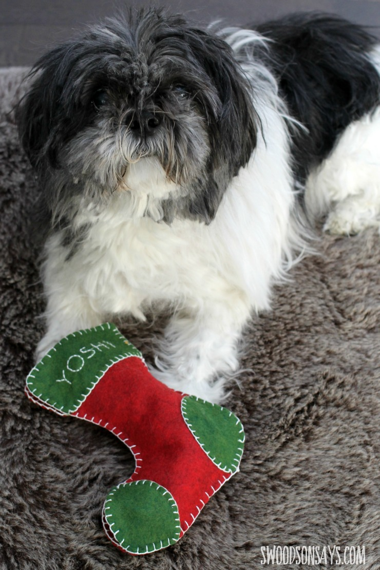 Happy shih tzu mutt with a Christmas stocking toy from a free sewing pattern.