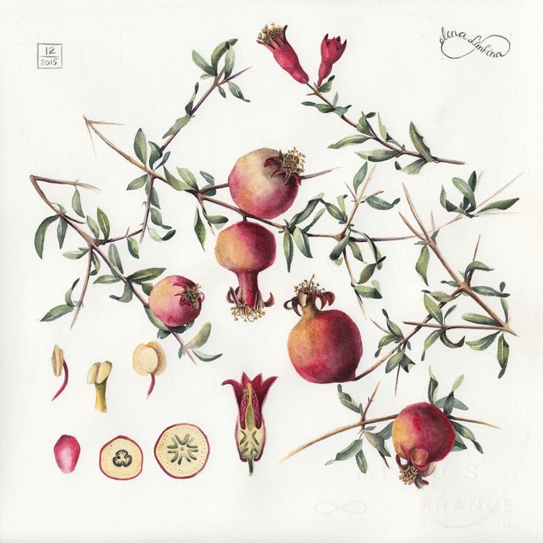 Pomegranates_780